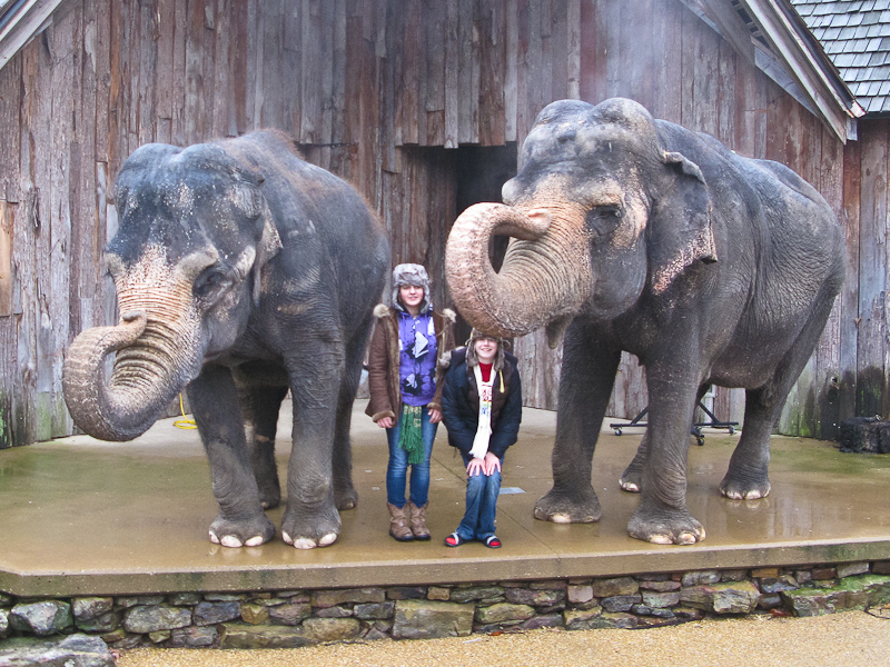 let the zoo elephants go essay Considering the stark contrasts in living conditions for the lives of wild and zoo elephants, it can be deduced that the failings of zoos to create an environment where elephants can thrive can .